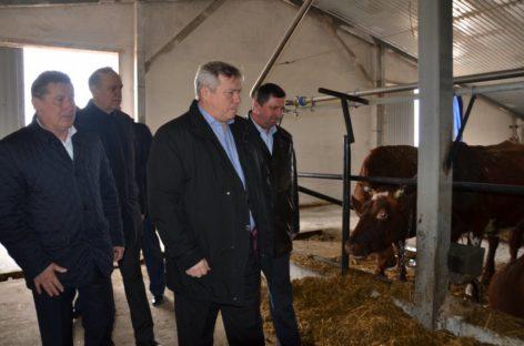 В Новом Егорлыке стали производить больше молока