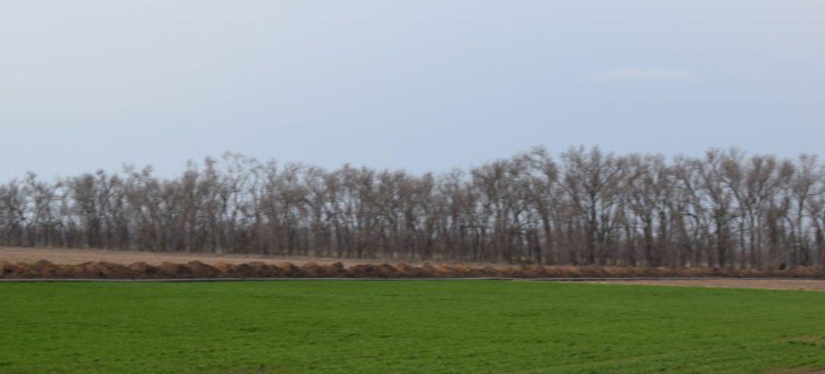 Сальские аграрии планируют засеять 75 тысяч гектаров земли