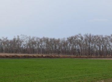 Оросительные системы хозяйств Сальского района оценили на «удовлетворительно»