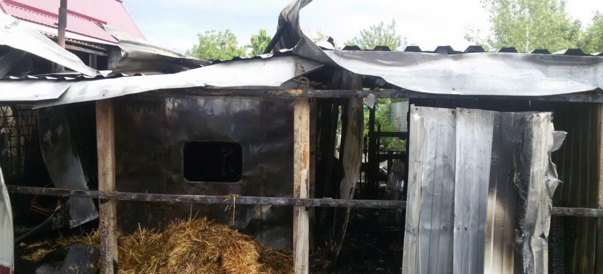В Сальском районе сгорела хозпостройка с цыплятами