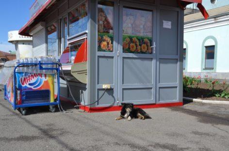 Сальчане обвиняют санэпидемстанцию в травле кошек и собак