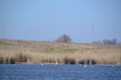 В Сальском районе будут обследовать реку Юлу