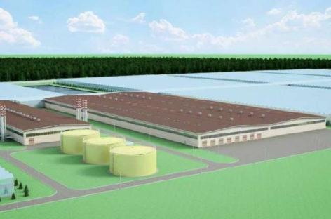 В Сальске хотят построить современный тепличный комплекс