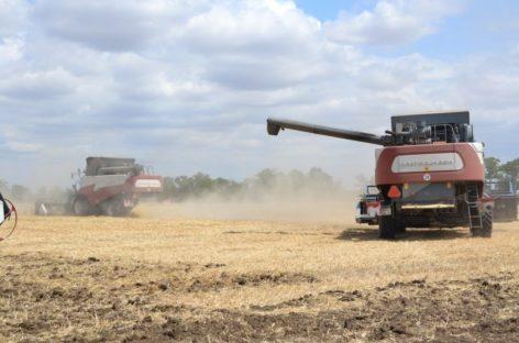 В Сальском районе намолотили более 400 тысяч тонн зерна нового урожая