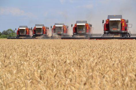 В Сальском районе валовой сбор зерна превысил 584 тысячи тонн
