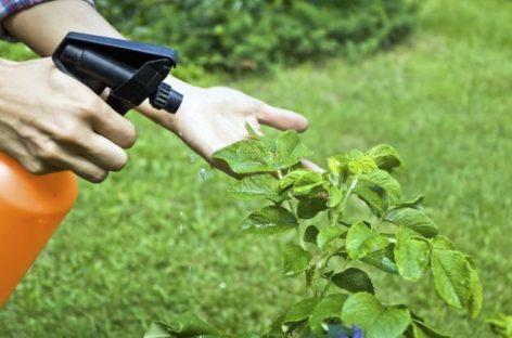 Советы огородникам: растения против болезней и вредителей