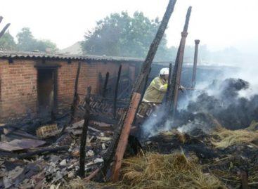 В Сальском районе при пожаре сгорели сельхозживотные