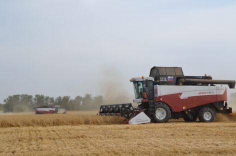 Аграрии Сальского района собрали более 660 тысяч тонн зерна