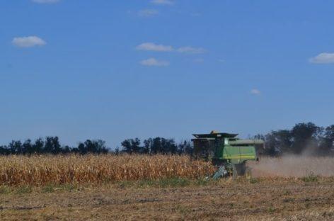 Аграрии Сальского района убирают кукурузу и подсолнечник