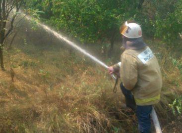 Тушили всем районом: как спасали от огня сальскую дубраву