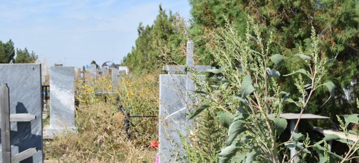 Сальские кладбища: кто приведёт в порядок заросшие могилы