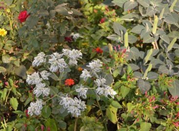 Цветы для города: из Заречья — с любовью