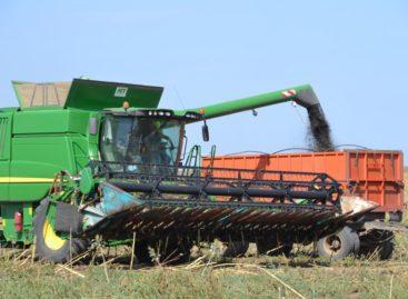 Семечки в этом году мелкие: аграрии собирают «чёрное золото» сальских полей