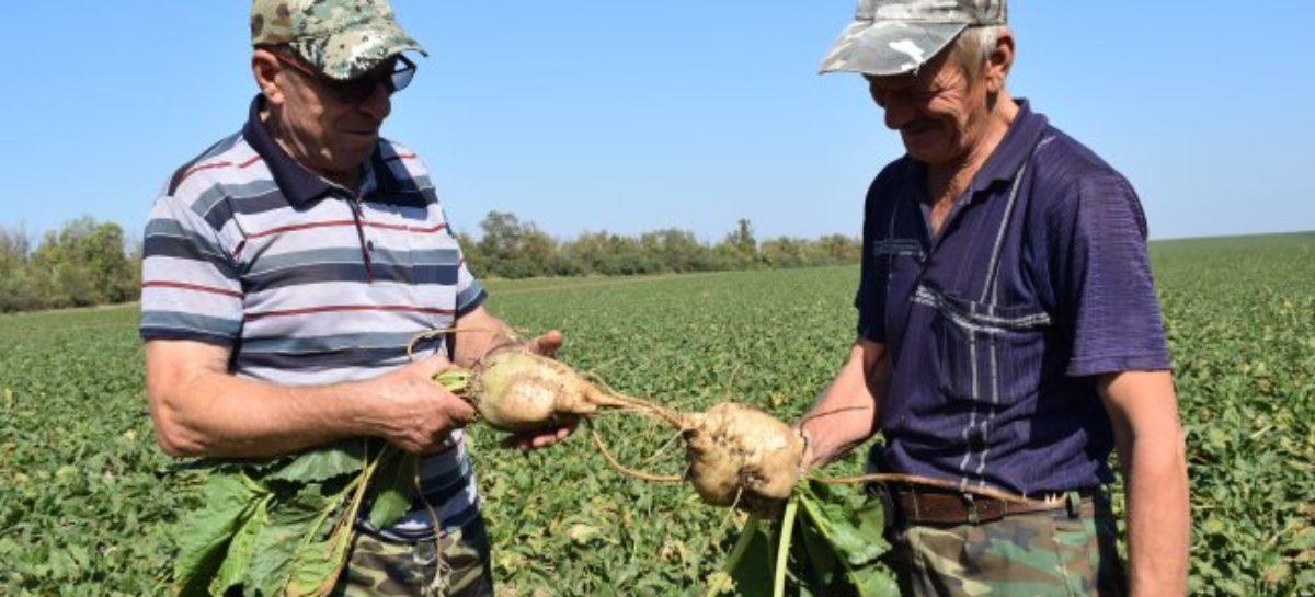 Аграрии завершают посевные и уборочные работы на полях Сальского района