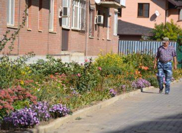 «Я люблю этот город»: как Сальск осенью цветет