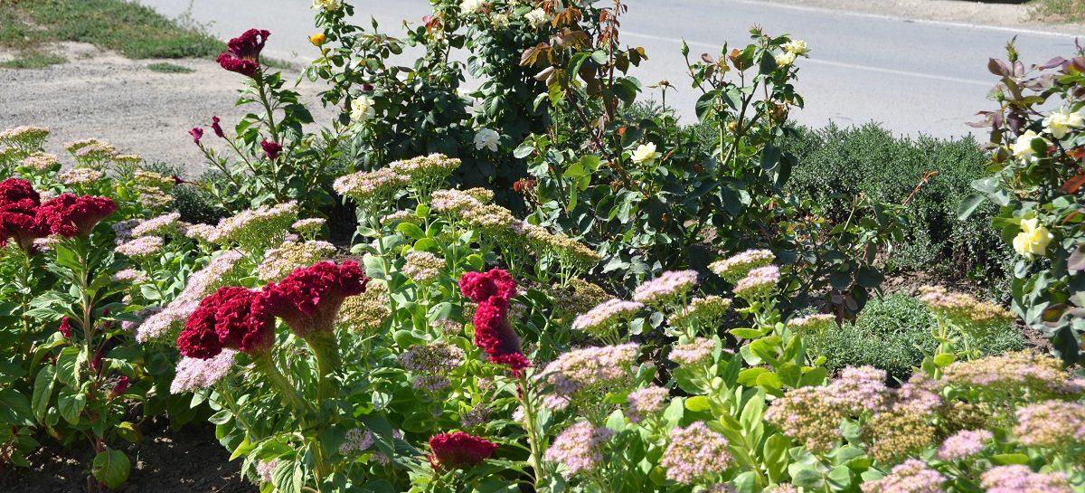 «Я люблю этот город»: самый чистый двор – на Прямой