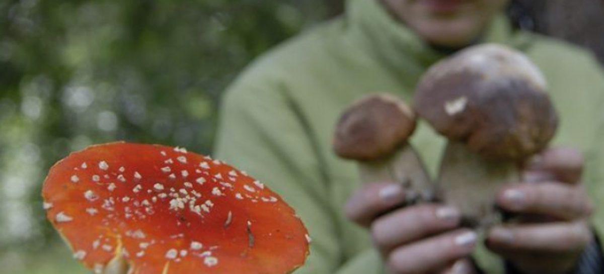 Врачи просят сальчан не есть дикорастущие грибы