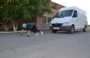 Сальчанка Татьяна Чеченева в свои 65 лет тянет грузовой автомобиль