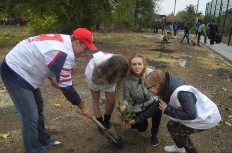 День древонасаждения в Сальске: Ново-Сальск украсили 50 молодых орехов