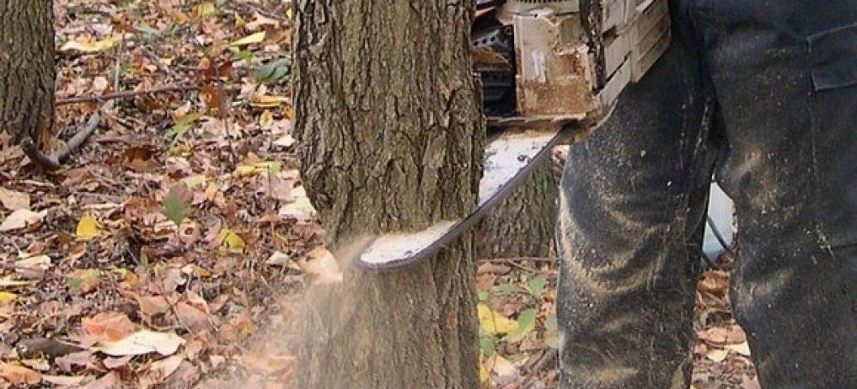 В Сальском районе наказали браконьера