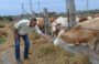 Фермерам Сальского района предлагают оформить гранты