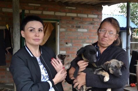 Сальчанки пытаются открыть на даче приют для брошенных животных