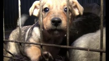 Александр Зайцев: к сожалению, труд собаколова Сальску еще нужен