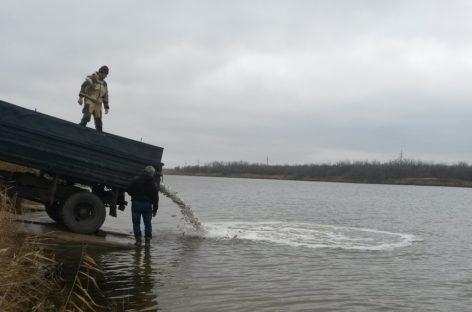 В Средний Егорлык выпустили две тонны молоди рыбы