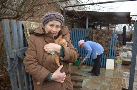 Как будут зимовать бездомные животные в Сальске