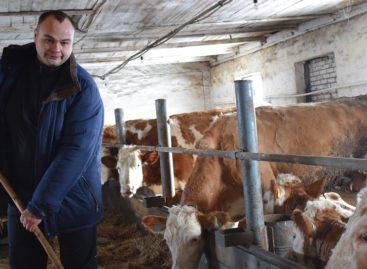 В Шаблиевке успешно развивается первая в районе семейная ферма