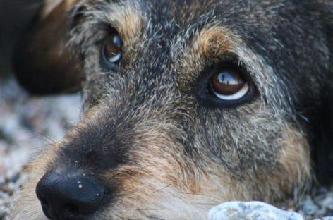 За жестокое обращение с животными грозит три года тюрьмы