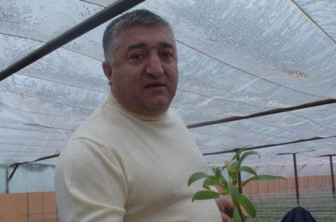 Фермер в Сальске выращивает голландские розы в теплицах