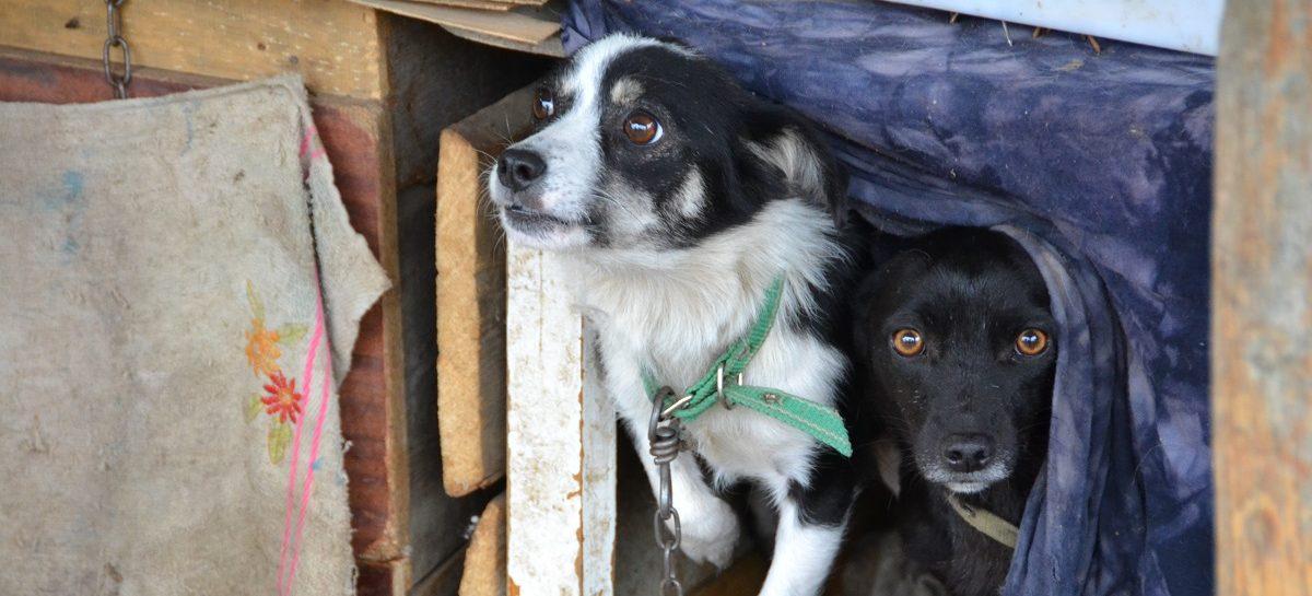 Около 150 беспризорных собак отловили в Сальске в прошлом году