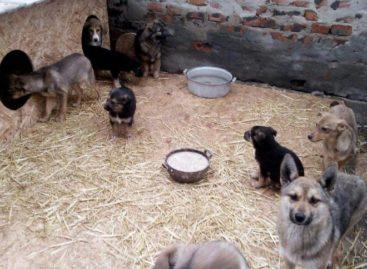 Сальские волонтеры просят сальчан помочь бездомным животным
