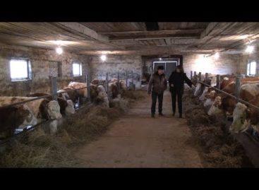 Как живет семейная животноводческая ферма в Сальском районе