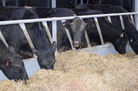 Фермеры Сальского района могут подать документы на субсидию