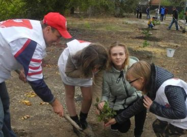 В День древонасаждения в Сальске высадят сотню молодых саженцев