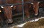 Еще трех сальских фермеров поддержали грантами
