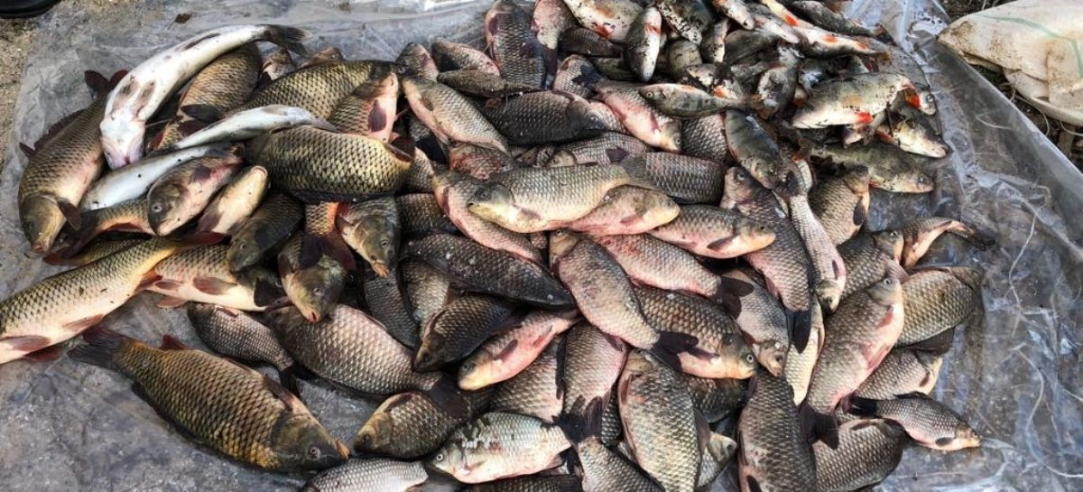 В Сальском районе ветслужба нашла в прудах больную рыбу