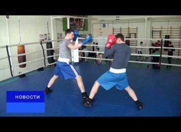 Воспитанники сальских тренеров успешно выступили на трех турнирах по боксу