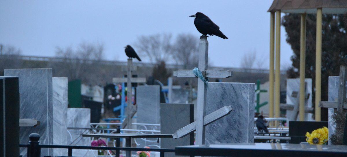 Живые воруют у мёртвых: сальчане возмущены тем, что на новом кладбище пропадают венки
