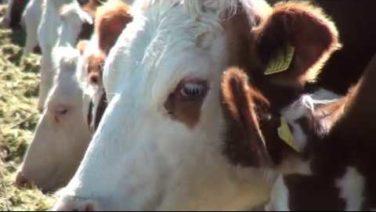 В Кермеке построили современную молочно-товарную ферму