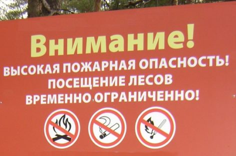 Сальчан просят воздержаться от посещения лесных массивов