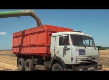 Уборка в Сальском районе: у «Славян» экватор жатвы пройден