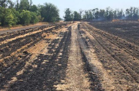 В Сальском районе горела пшеница