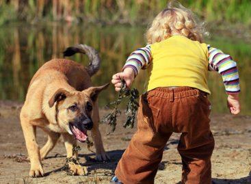 В Сальске шестилетнего мальчика укусила собака