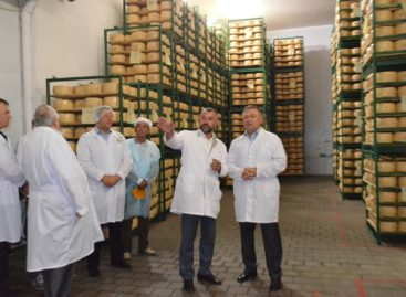 Сыродельный завод в Семикаракорске увеличил свои производственные мощности