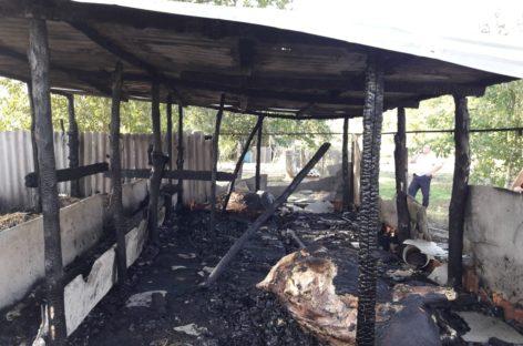 В Сальском районе из-за пожара в частном подворье погибли коровы