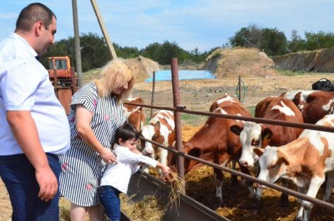 На Дону гранты помогают развивать молочное животноводство