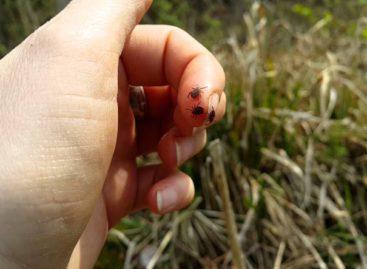С начала сезона в Сальском районе почти 400 человек укушены клещами